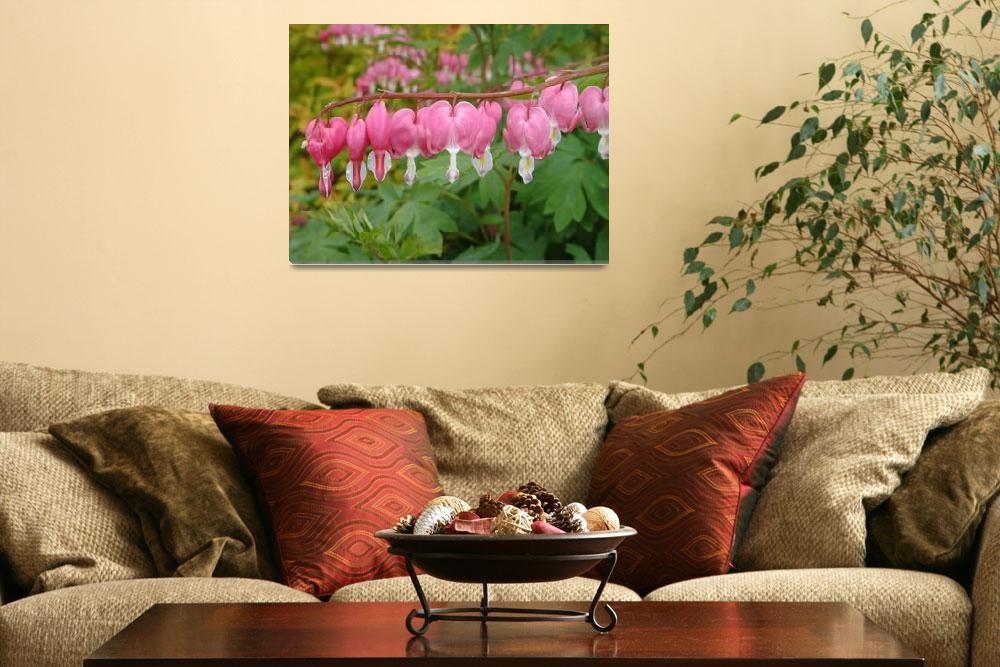 """""""Rows of bleeding hearts""""  (2012) by Anewsgal"""
