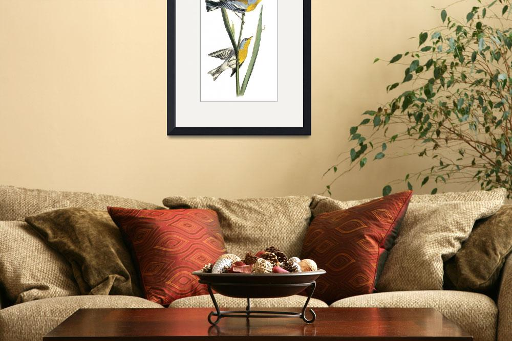 """Northern Parula Bird Audubon Print&quot  by ArtLoversOnline"