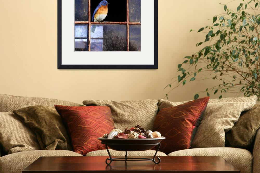 """barn window / eastern bluebird&quot  (2008) by rchristophervest"