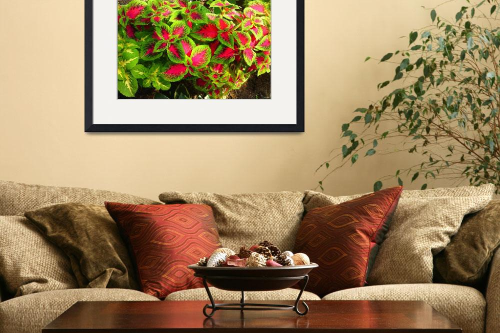 """""""pink green coleus&quot  (2015) by simmonsgareth"""
