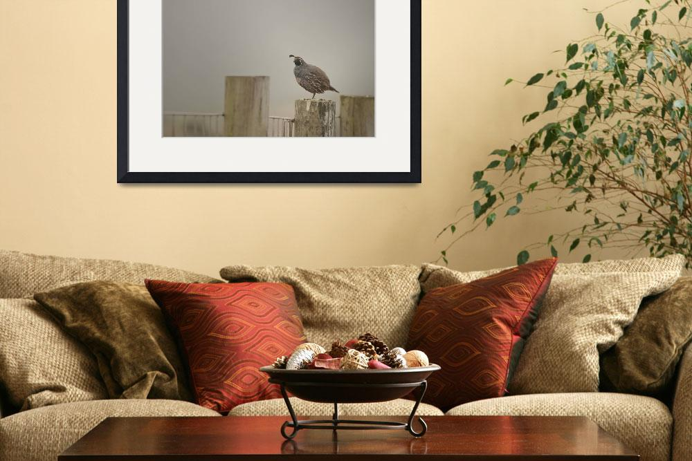 """""""California Quail in Fog&quot  (2011) by SederquistPhotography"""