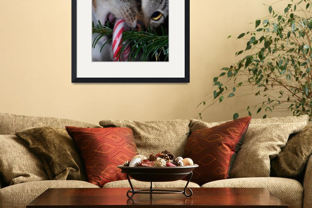 """""""CAT WITH CANDY CANE""""  (2007) by barbsummering"""