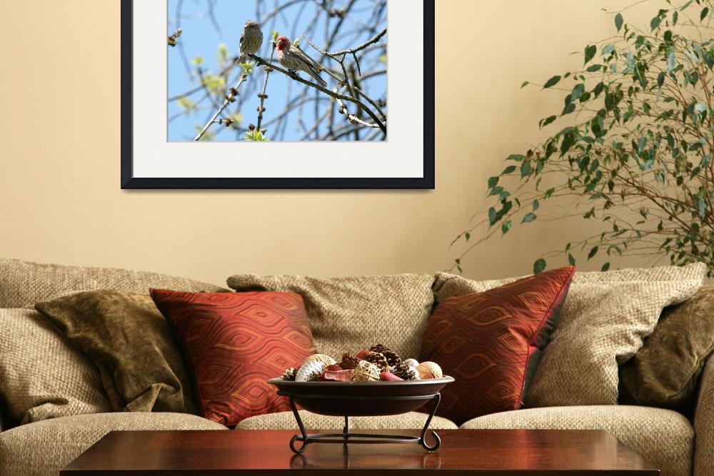 """""""House finch&quot  by cameragal"""