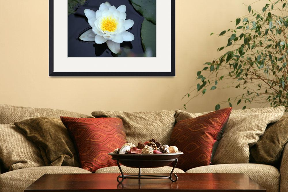 """""""Water lily""""  (2012) by"""