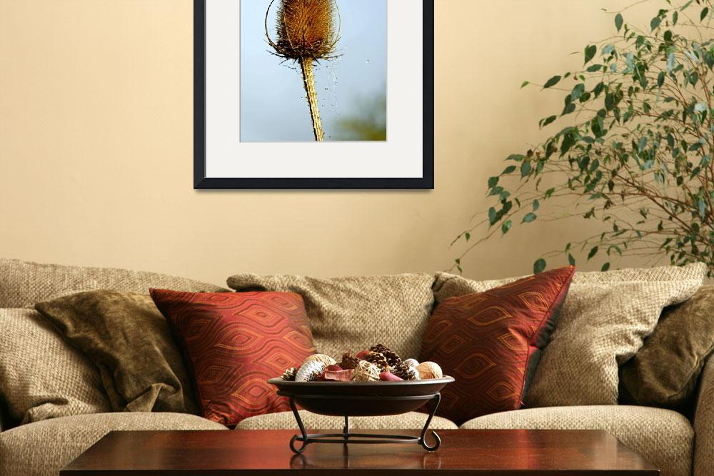 """Teasel Laced with Morning Dew (26985-RDA)&quot  (2010) by rodjohnson"