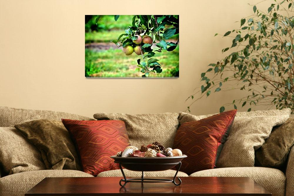 """""""Orchard Harvest""""  (2011) by whaticansee"""