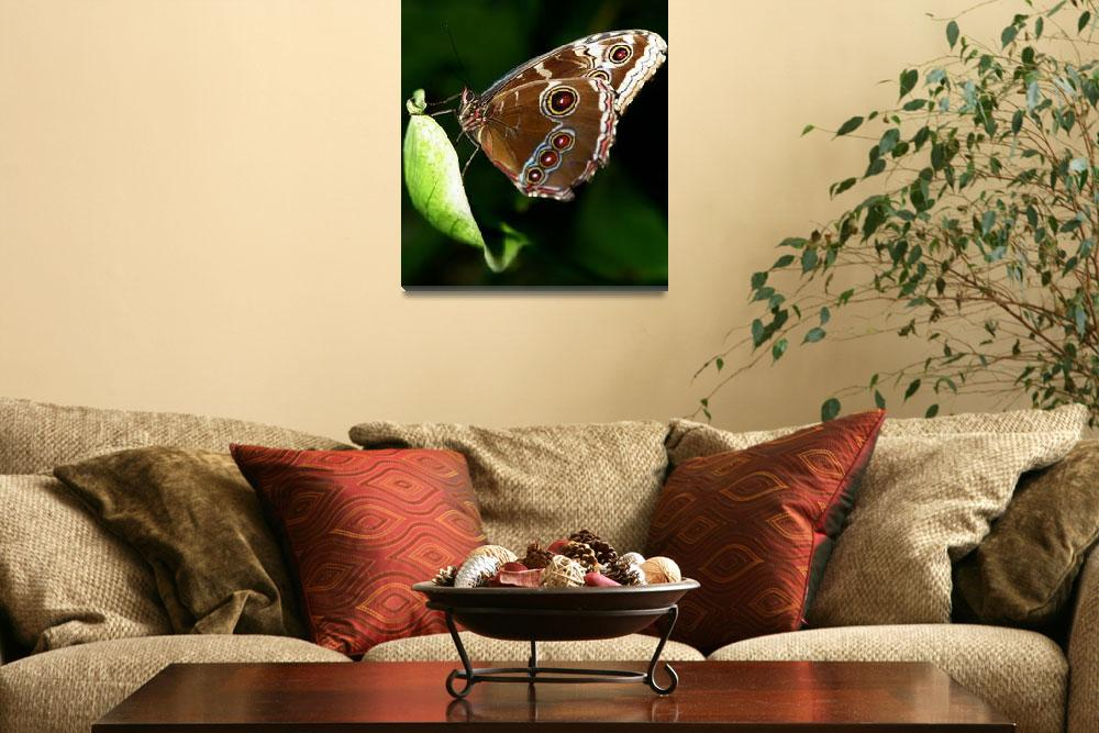 """""""Butterfly""""  by barbee"""