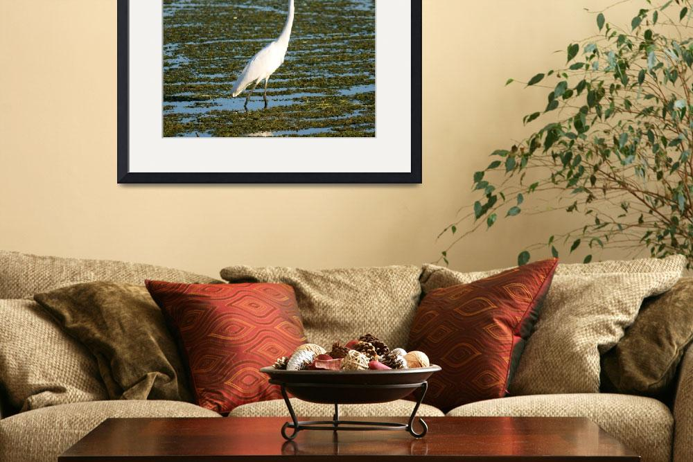 """""""Great egret""""  by cameragal"""