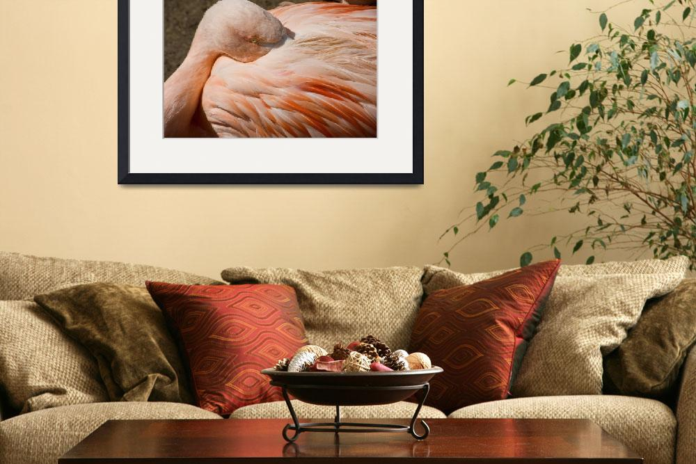 """""""Chilean Flamingos (P. chilensis)&quot  (2009) by eyalna"""