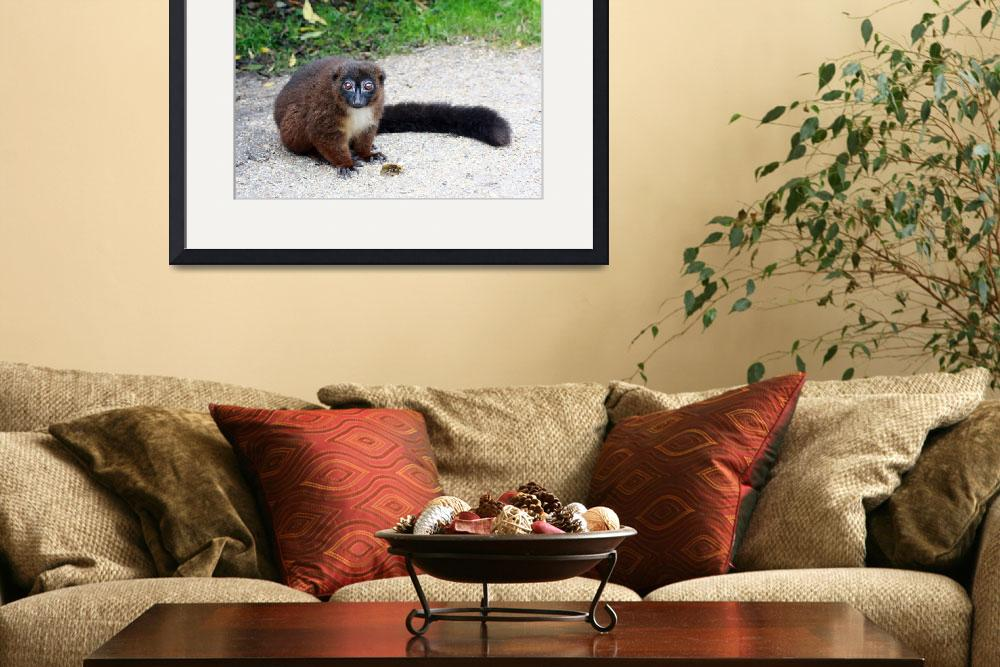 """""""Red Ruffed Lemur&quot  (2010) by Funcards"""