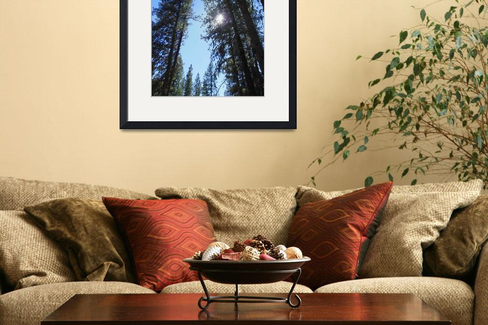 """Idaho Mountain Pines""  (2014) by joeyartist"