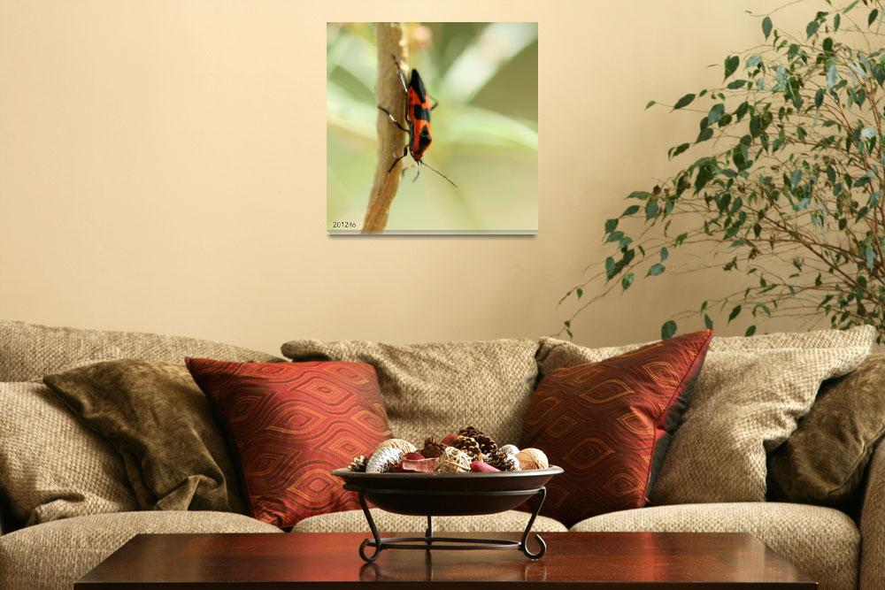 """""""Black spotted Orange Insect""""  (2012) by lwunlimited"""