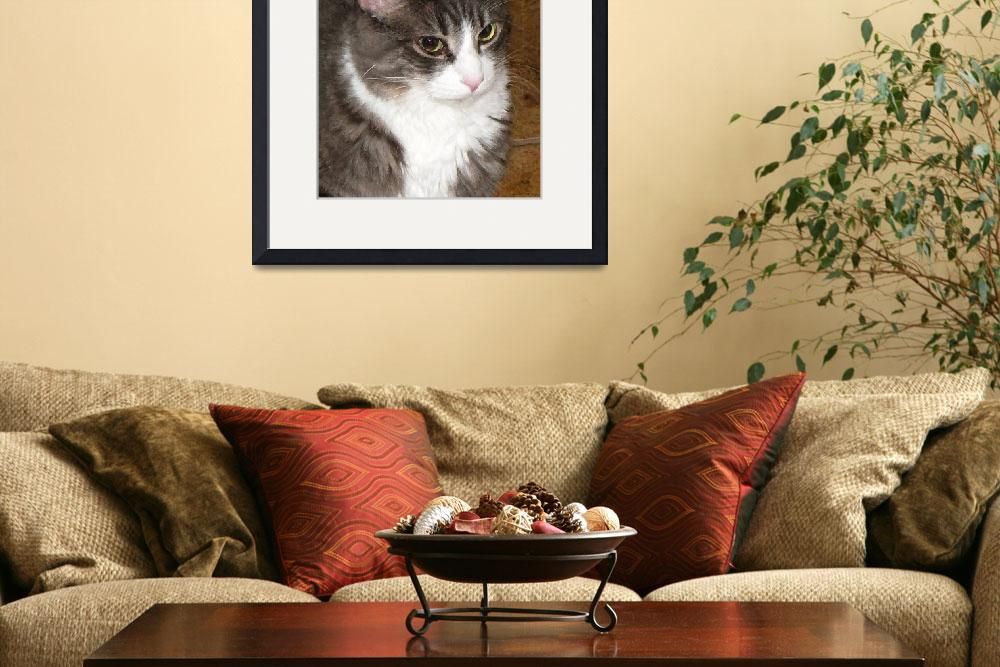 """""""Purr~fect poster&quot  (2008) by rayjacque"""