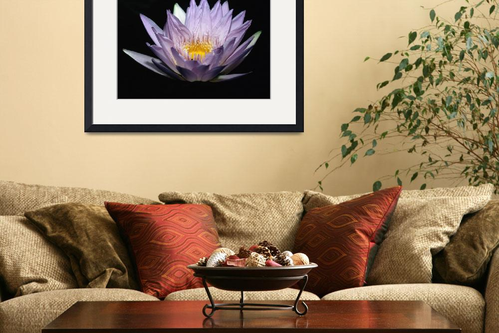 """""""Illuminated Blue Water Lily&quot  (2008) by George_Oze"""