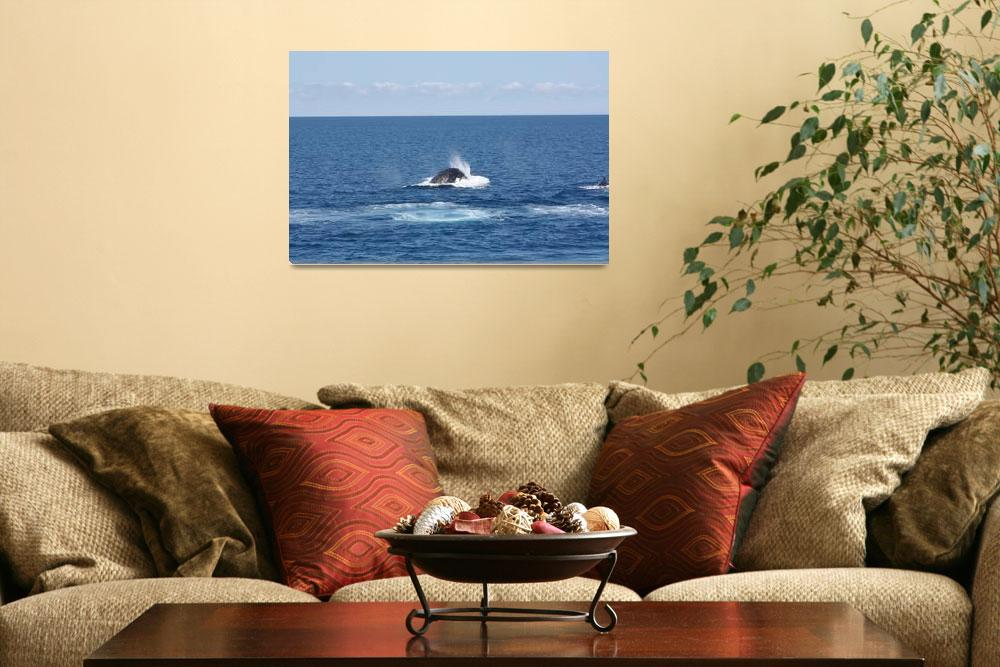 """""""NaP_ Whale Watching074""""  by nevilleprosser"""