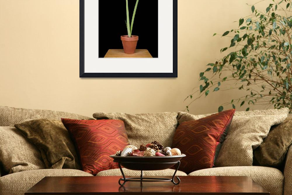 """""""Amaryllis Lagoon&quot  by robnelmsphotography"""