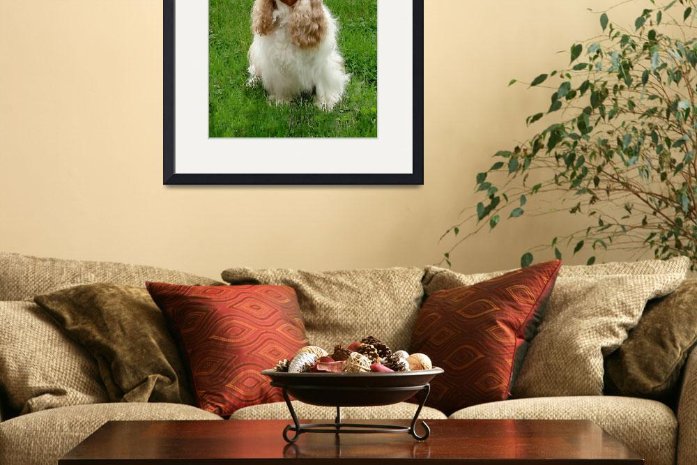 """Cavalier King Charles Spaniel&quot  by lindacarroll"