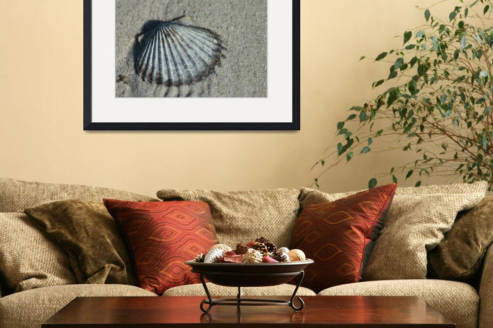 """""""Scallop""""  (2010) by amrknite"""