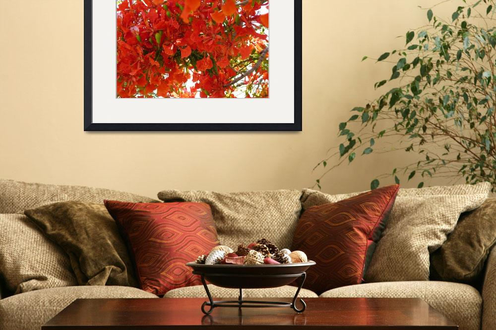 """""""The Tabachin or Flamboyant Tree&quot  by billdelaluz"""