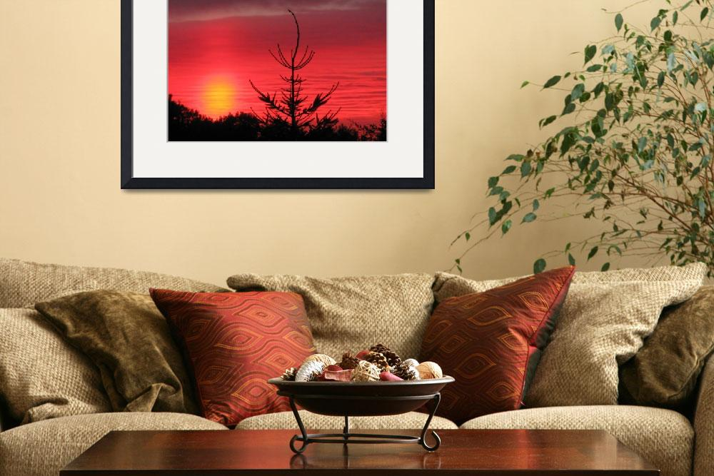 """""""norway spruce sunset&quot  (2011) by shindigenometry"""