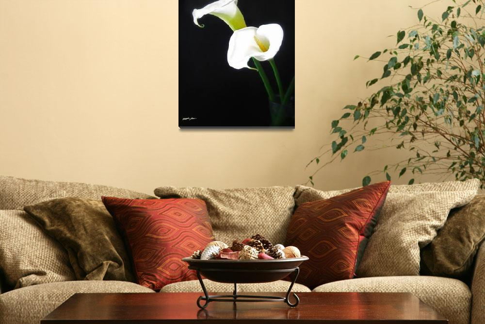 """""""Elegant Calla Lily Flowers 1&quot  (2011) by ChristopherInMexico"""
