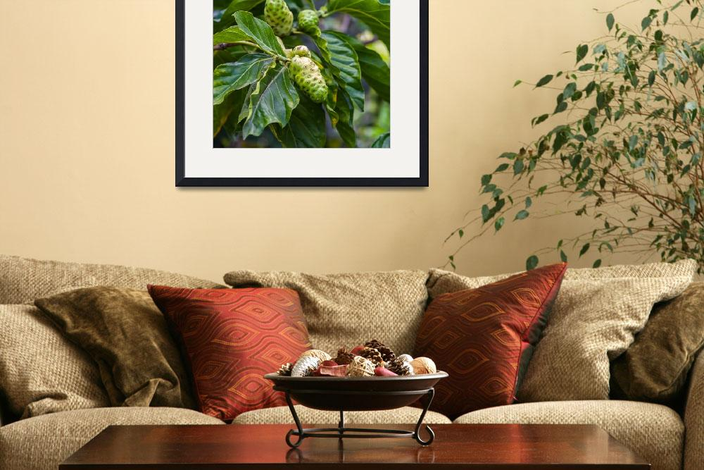 """""""Noni fruit growing on a tree&quot  (2013) by puravidaviews"""