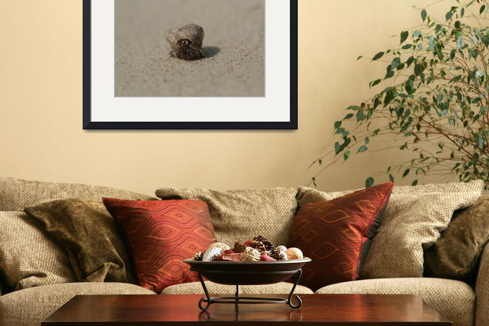 """""""hermit crab on the beach""""  (2008) by pjhorvath76"""