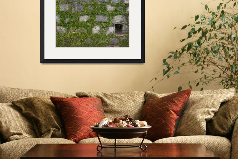 """""""Moss Covered Wall""""  (2009) by citybirder"""