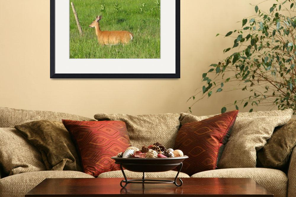 """""""Whitetail Deer&quot  (2009) by Whittier"""