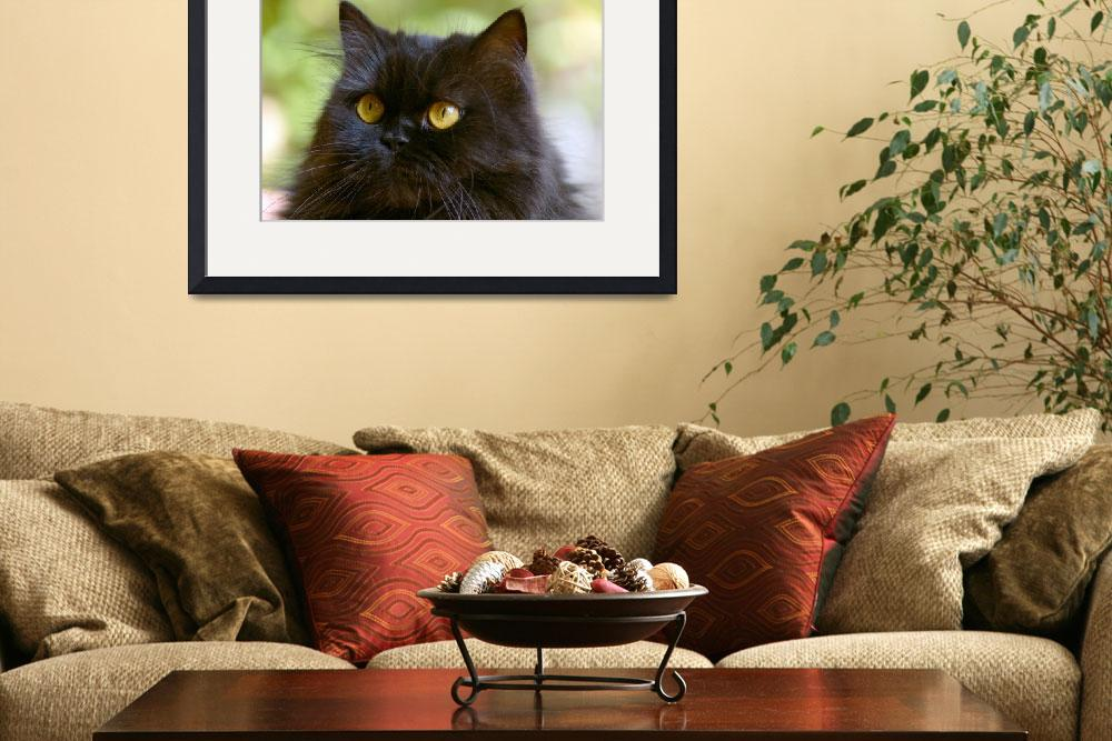 """""""Persian cat""""  by Alexphoto"""
