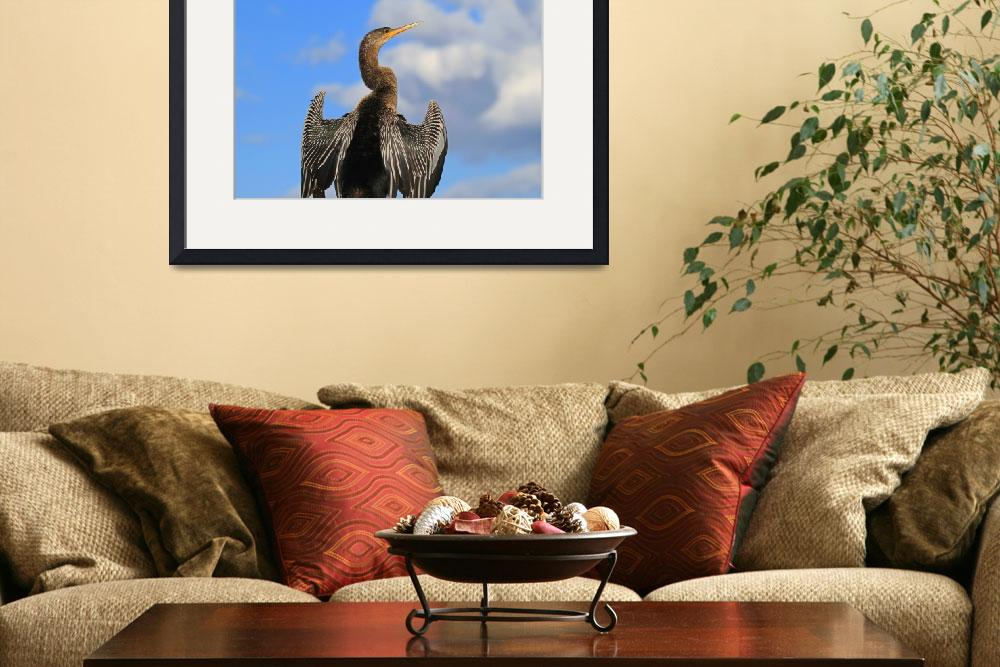 """Anhinga&quot  (2012) by shelshots"