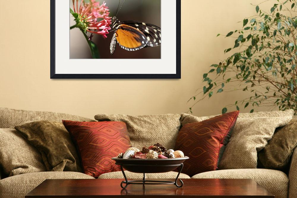 """""""Butterfly 2""""  by Vincent-tang"""