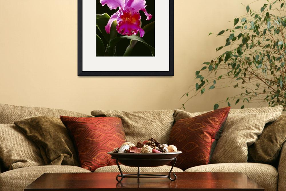 """Studio Shot Of Single Purple Cattleya Orchid On Pl&quot  by DesignPics"