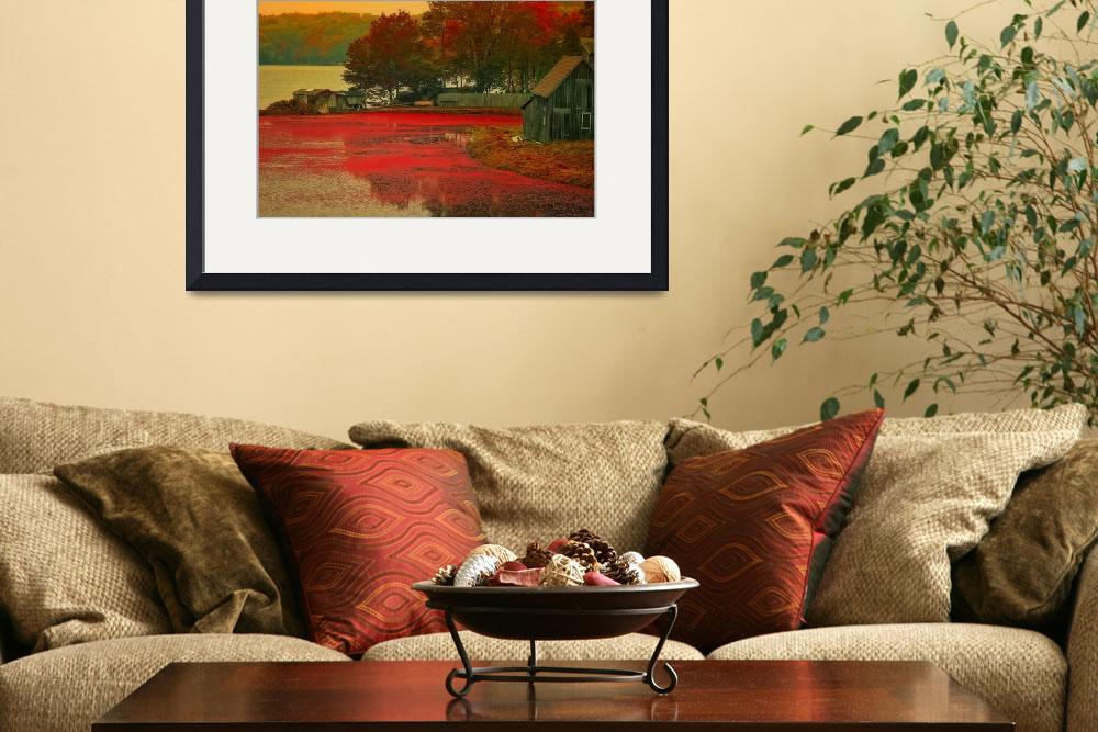 """""""Cranberry Bog Farm in the Fall&quot  (2008) by ginacormier"""