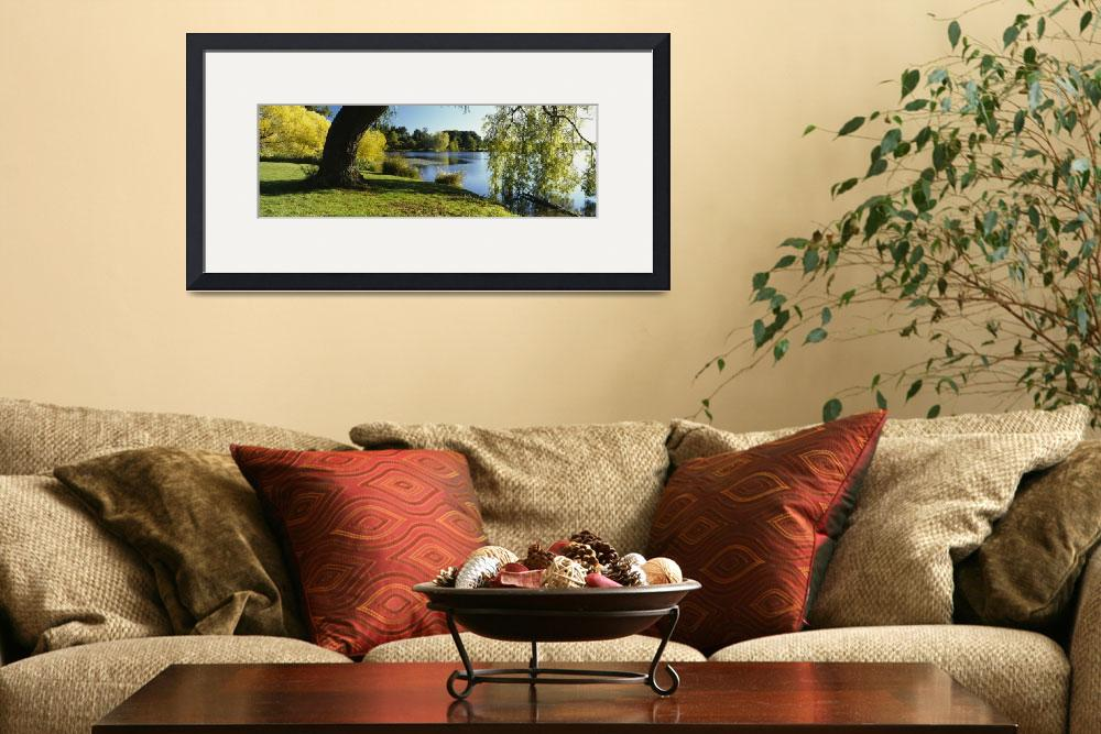 """Willow tree by a lake&quot  by Panoramic_Images"
