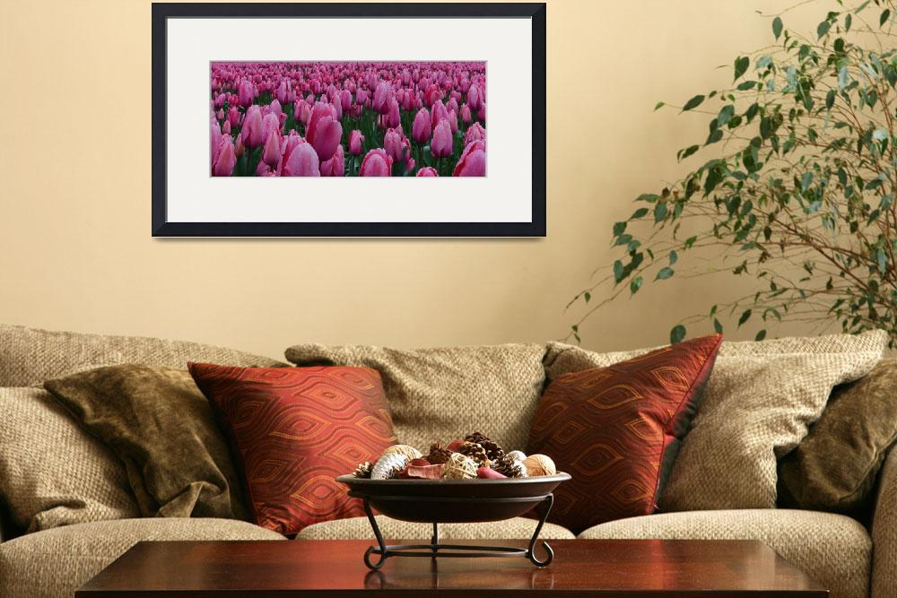 """""""Pink Tulips&quot  (2014) by boppintheblues"""