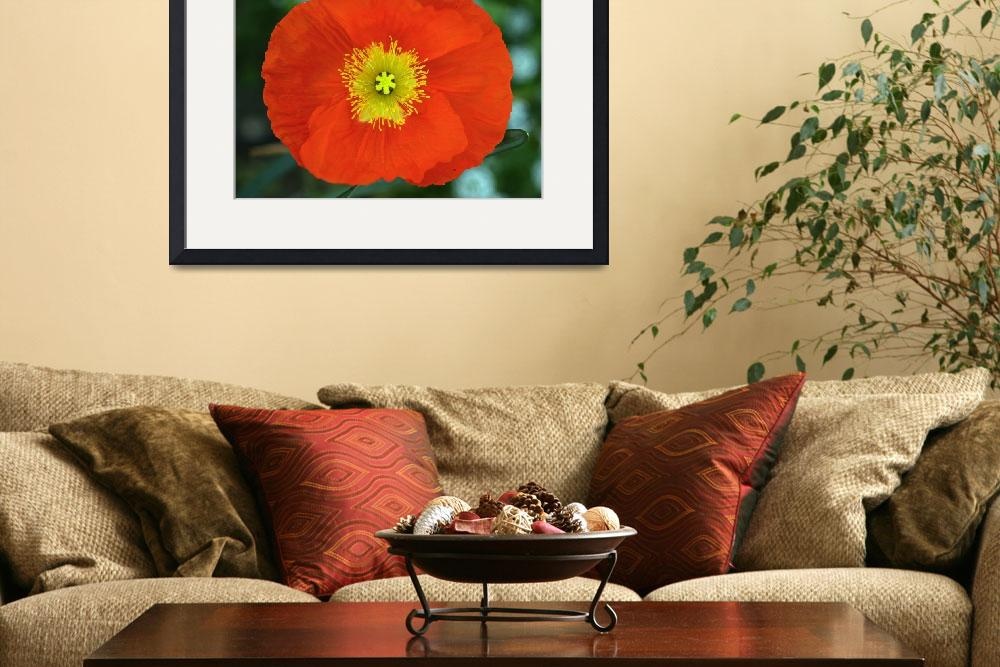"""Red Poppy&quot  (2008) by paulhood"