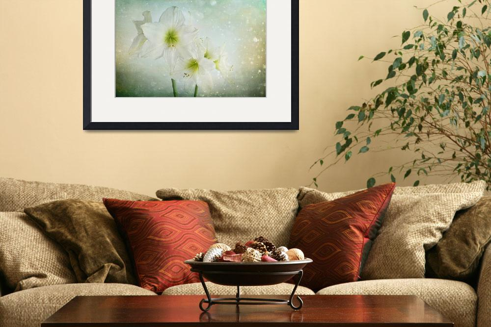 """""""Dreamy White Amaryllis&quot  (2015) by AnnG"""