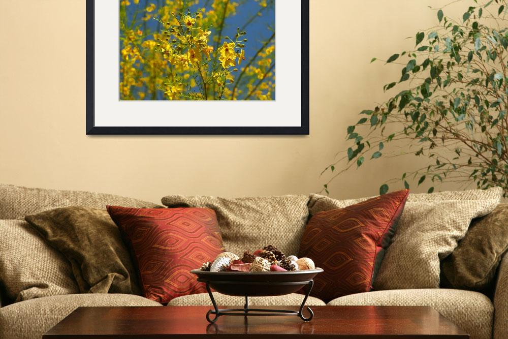 """""""Palo Verde Tree With Yellow & Red Blossoms&quot  (2008) by budo"""