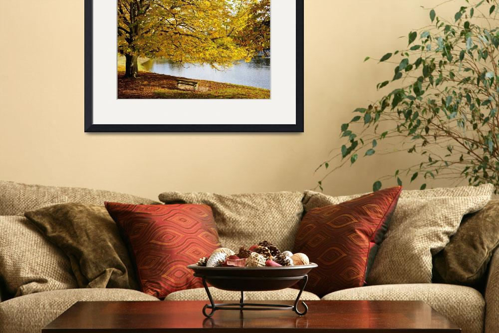 """A Large Tree And Bench Along The Water In Autumn&quot  by DesignPics"