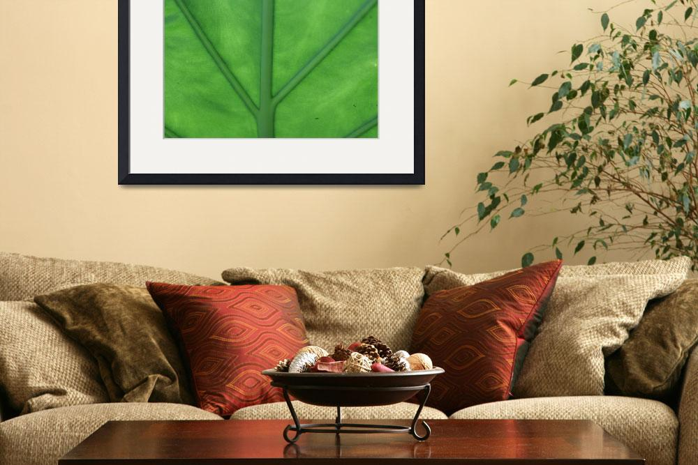 """""""Green Veined Leaf&quot  (2008) by ritzema"""