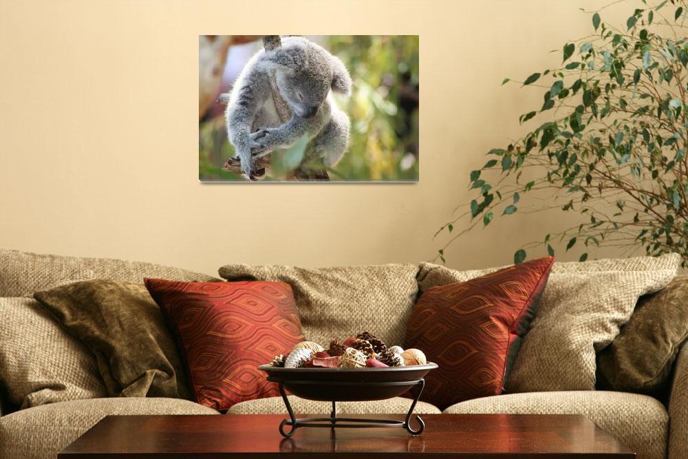 """Koala Nap (8)""  by LutherBailey"