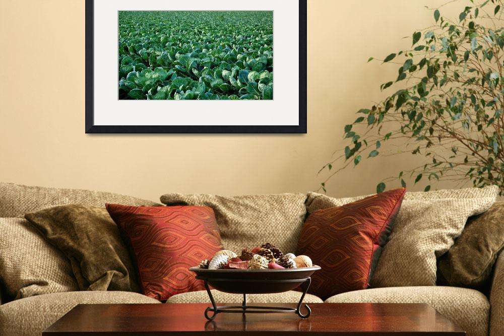 """""""Brussel Sprout Crop&quot  by rubybgold"""