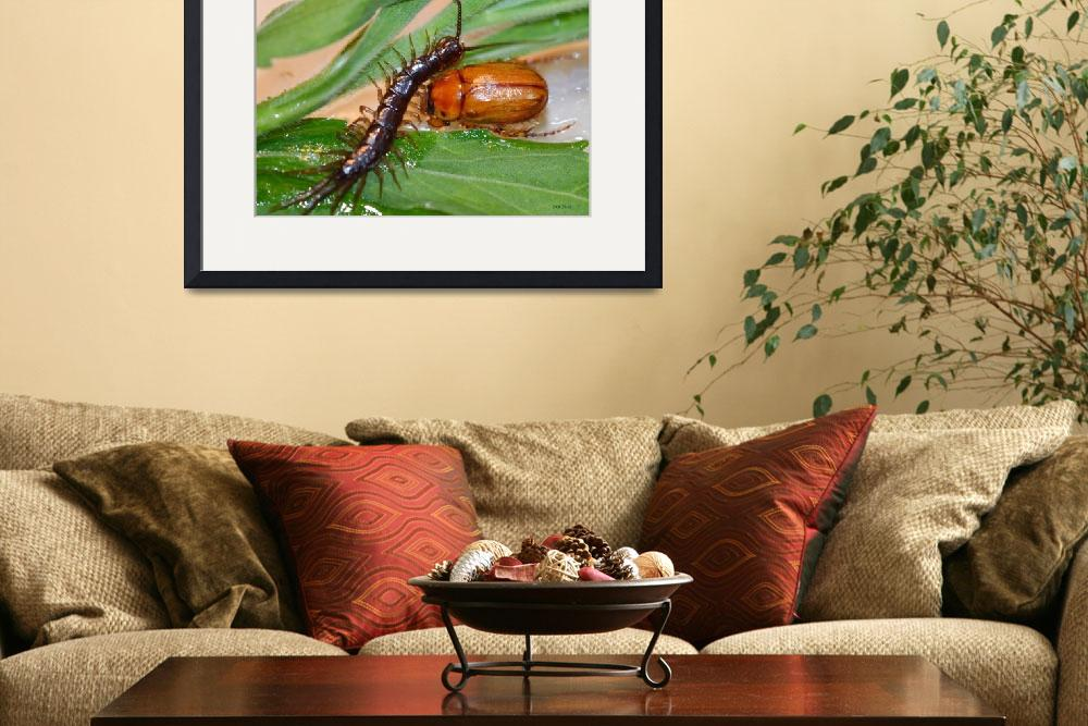 """""""Centipede and June Bug&quot  (2012) by theblueplanet"""