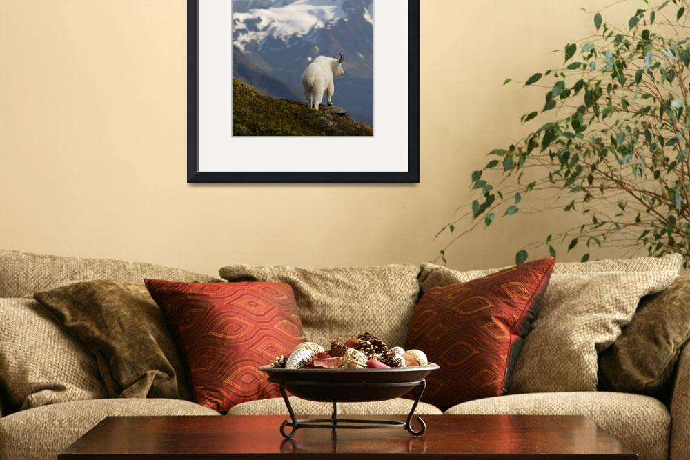 """""""A Mountain Goat stands on a ridge with the scenic&quot  by DesignPics"""