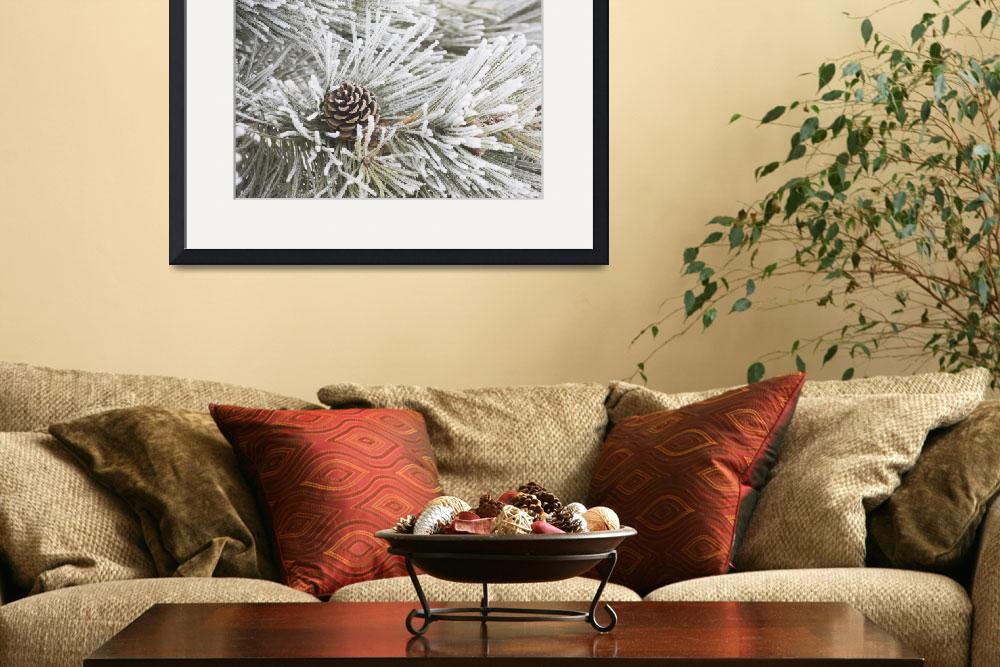 """""""Frost Covered Pine Needles And A Pine Cone, Calgar""""  by DesignPics"""