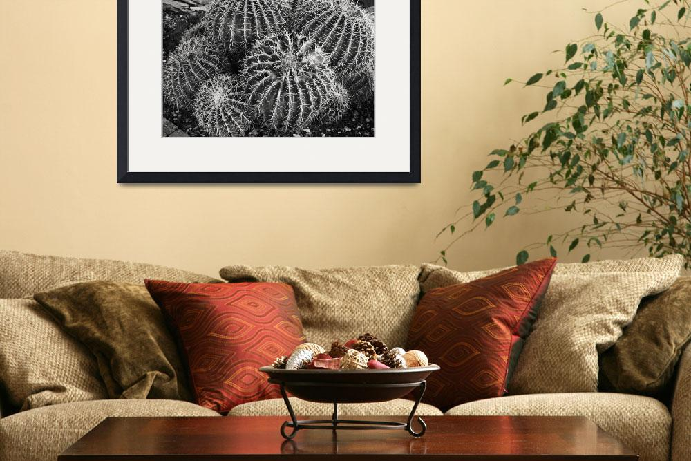 """Barrel Cactus #2, Phoenix&quot  (2014) by black-and-white"