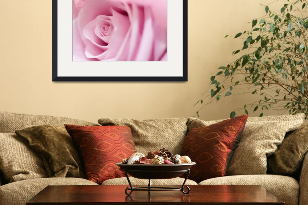 """""""Pink Rose&quot  (2011) by ArgosDesigns"""