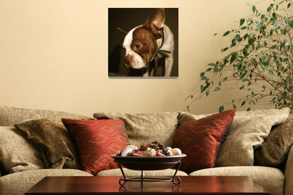 """""""Boston Terrier&quot  (2009) by travelyn"""