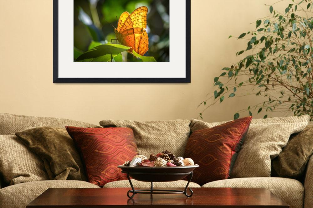 """""""Orange Butterfly&quot  (2011) by JolaMartysz-Photography"""